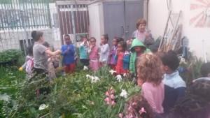 In a community garden