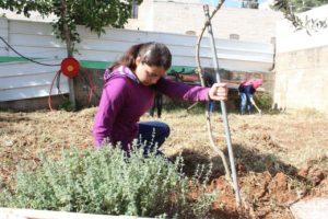 Developing a new garden